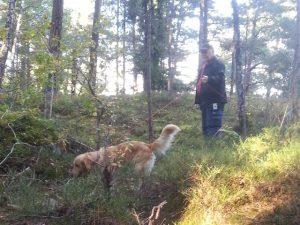 Personspår med hund hos Glada Jyckar