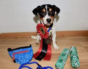 Ziggy med rosett, bronsmedalj och priser iform av mat, belöningsväska och koppel