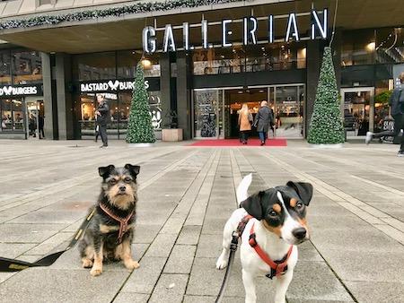 Zorro och Ziggy framför Gallerian