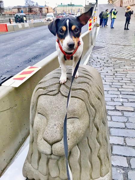 Ziggy på ett lejon av sten