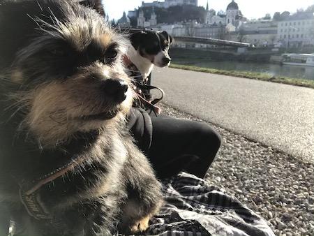 Zorro och Ziggy på en bänk vid kanalen i Salzburg