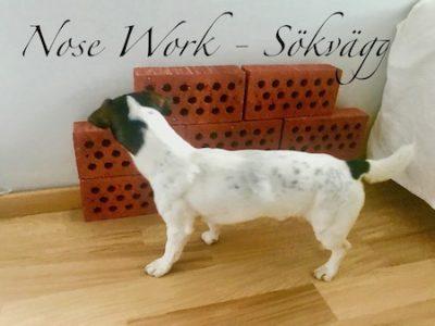 Ziggy söker på en sökvägg gjord av skorstenstegel