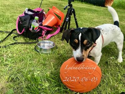 Ziggy med sin frisbee och träningsväska