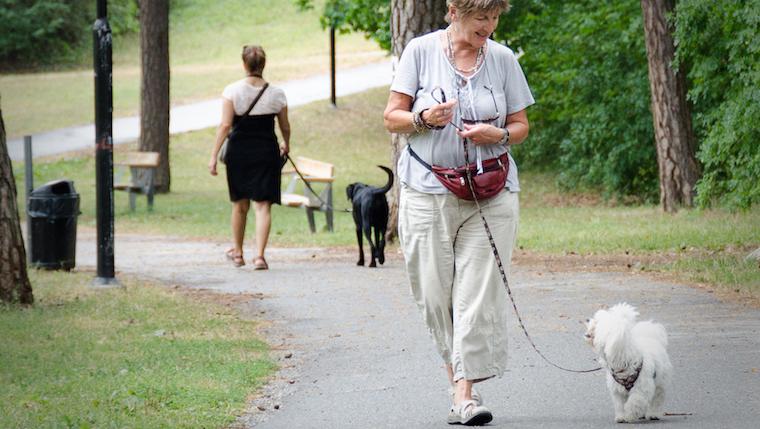 Harmoniskt hundmöte efter genomgången kurs Vardagträning, Aktivering & Abrovinker